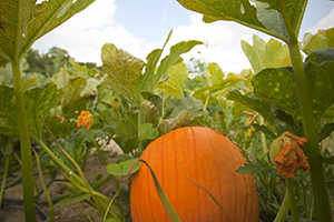 10 Favorite Virginia Pumpkin Patches