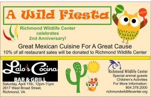 A Wild Fiesta – Our 2nd Anniversary Celebration!