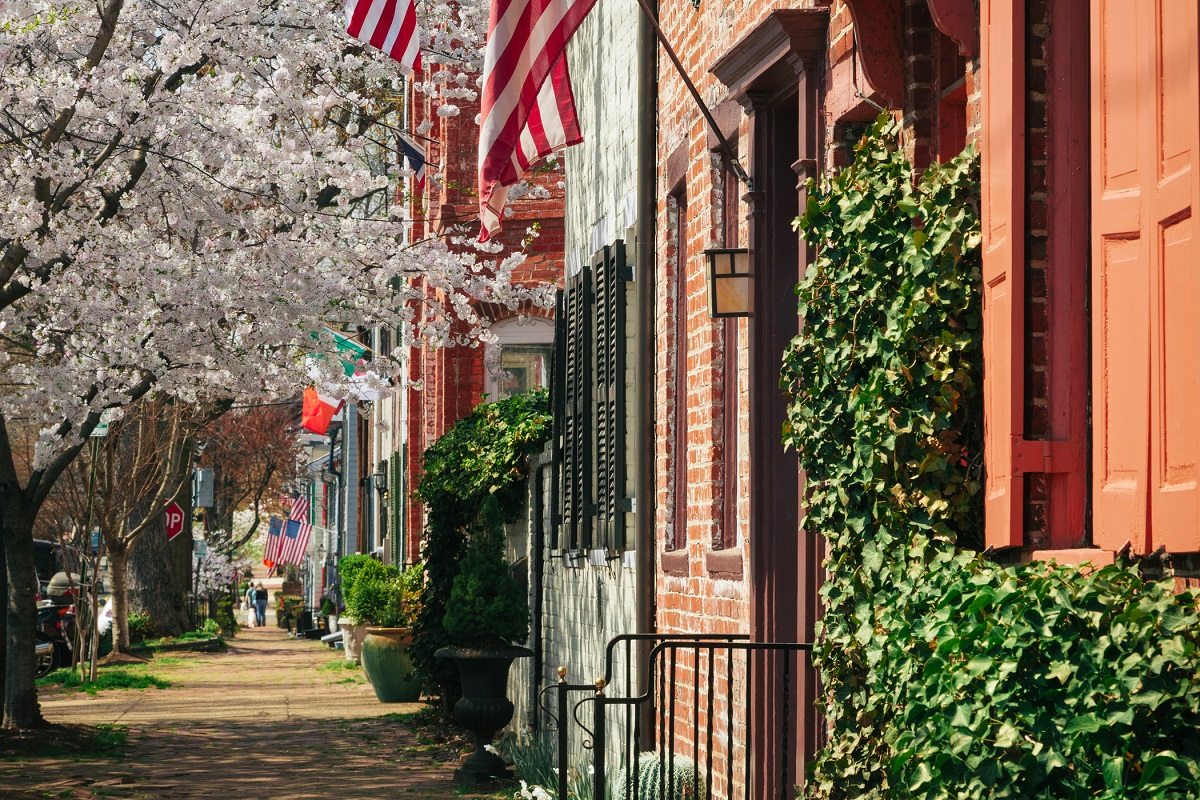 old town alexandria row houses with cherry blossoms