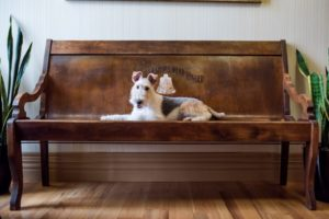 9 of Virginia's Most Pet-Friendly Hotels