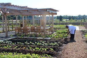 Chef's Garden at Salamander Resort and Spa